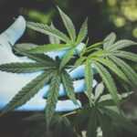 Known diseases and conditions where medicinal cannabis helps!
